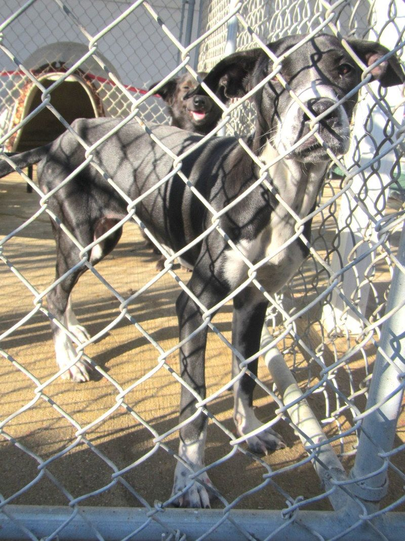 Petfinder Adoptable Dog Hound West Monroe La 243blue Or 281blue Dogs Dog Boarding