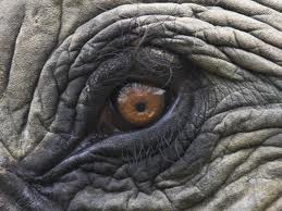 Elephant Eye Png : Gray elephant illustration, drawing elephant cartoon illustration, elephant, mammal, child png.
