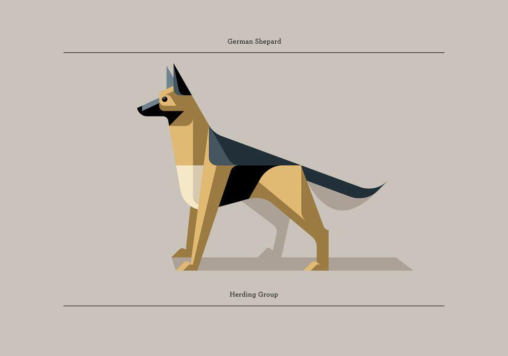 Limited edition German Shepherd print, by Josh Brill.