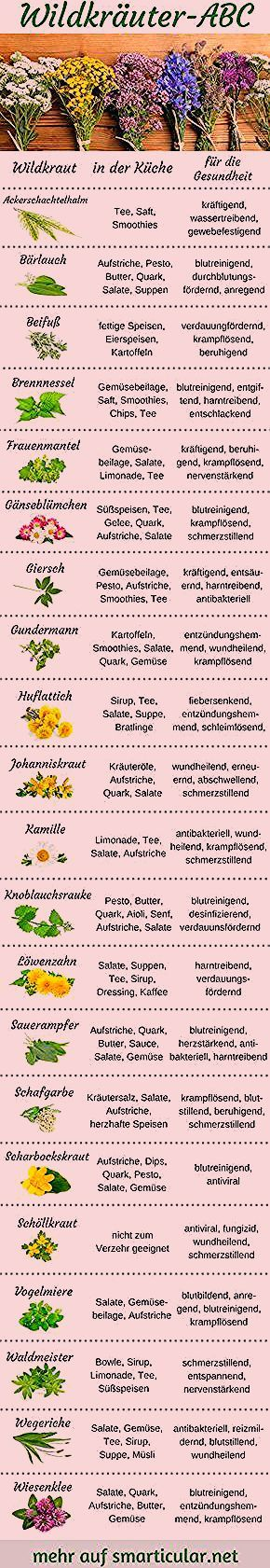 Photo of Wildkräuter-ABC: Pflanzen für Küche und Gesundheit vielseitig nutzen