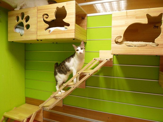 Catswall A Modular Cat Climbing Wall Perfect For You Pet Cat Climbing Wall Cat Houses Indoor Cat Room