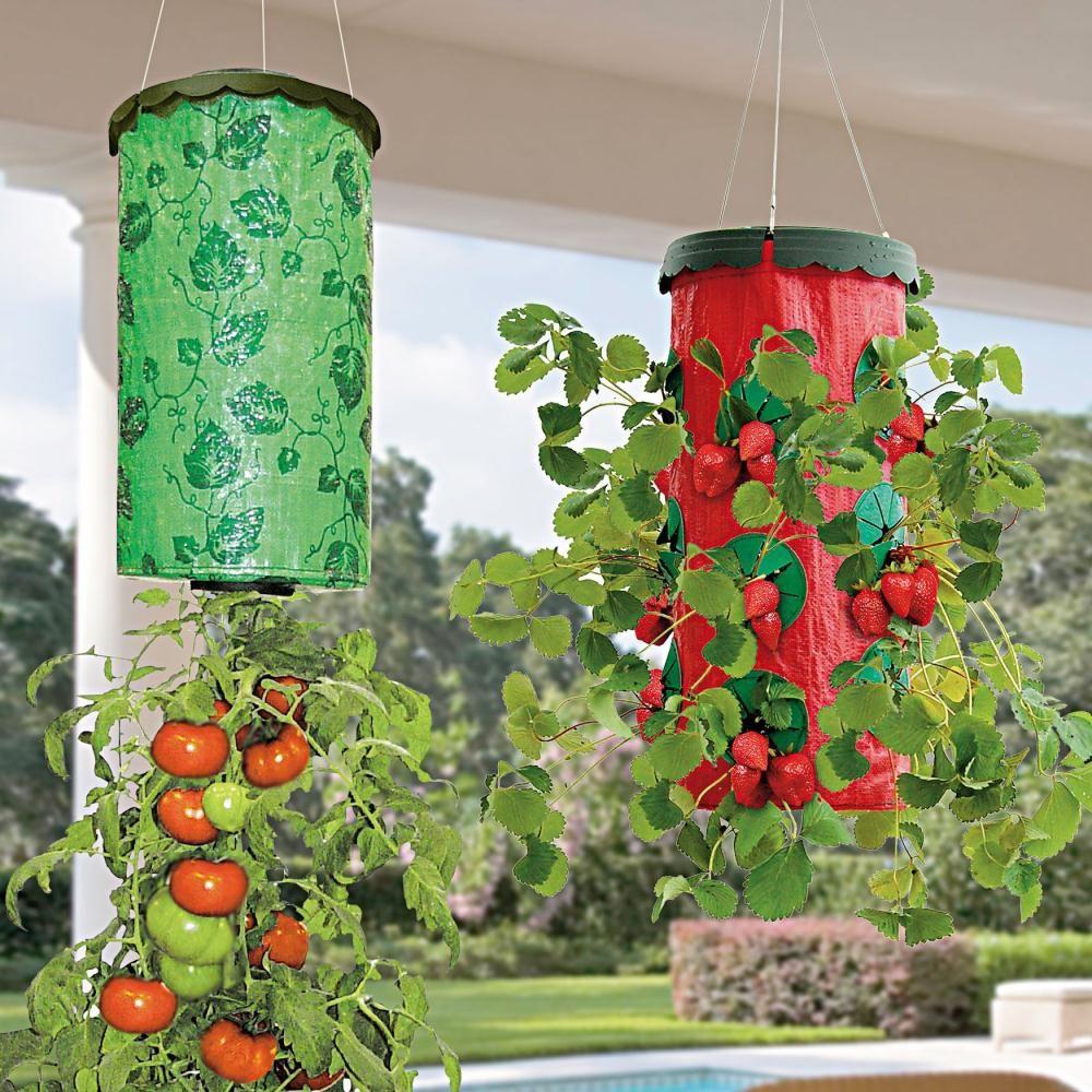 Macetas colgante frutillas y tomates maceteros - Jardines y plantas ...