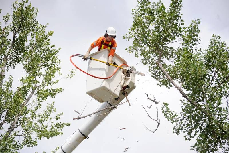 City of Corner Brook conducts tree removal and pruning on