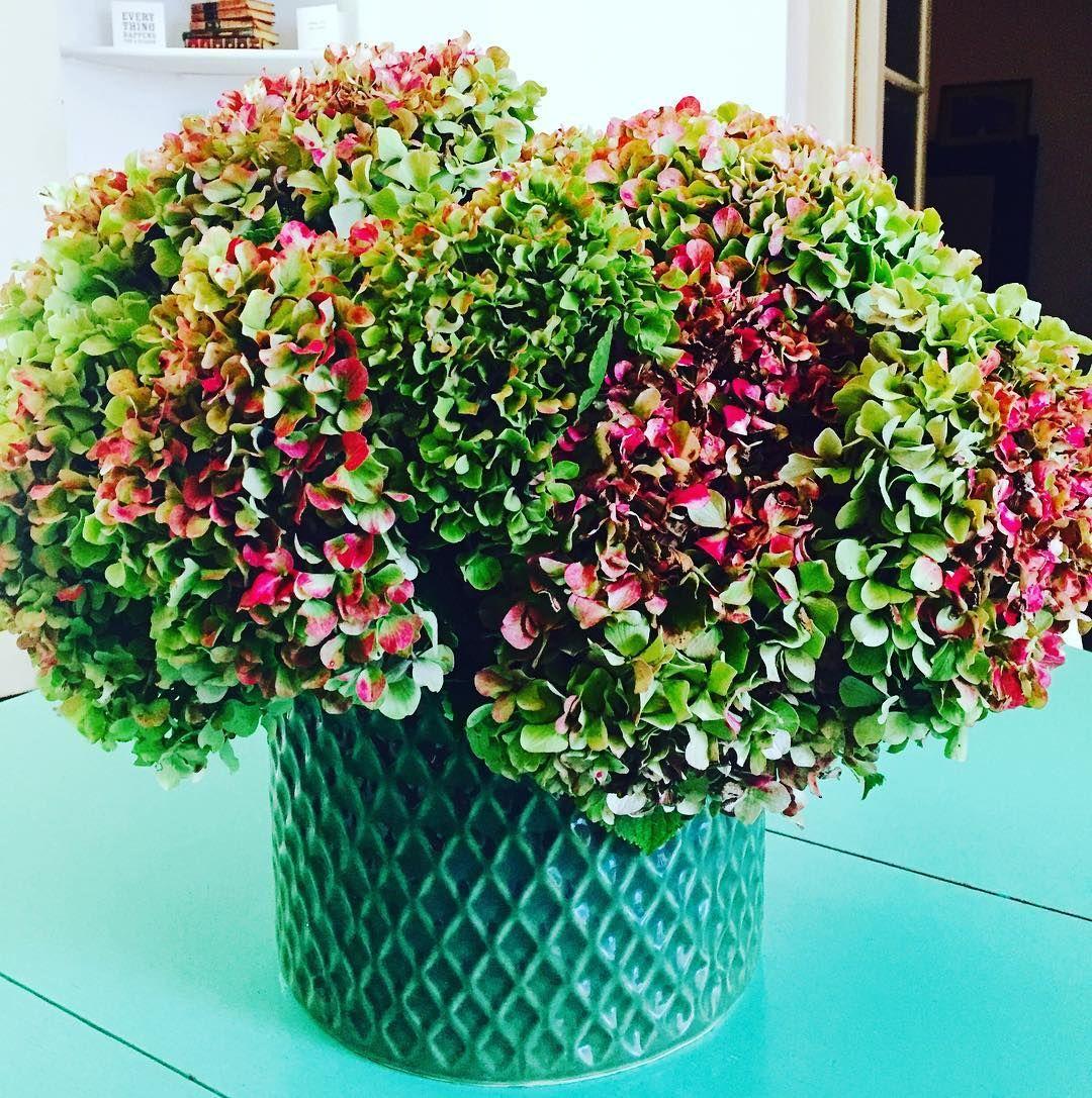 Hortensias . #amazingflowers
