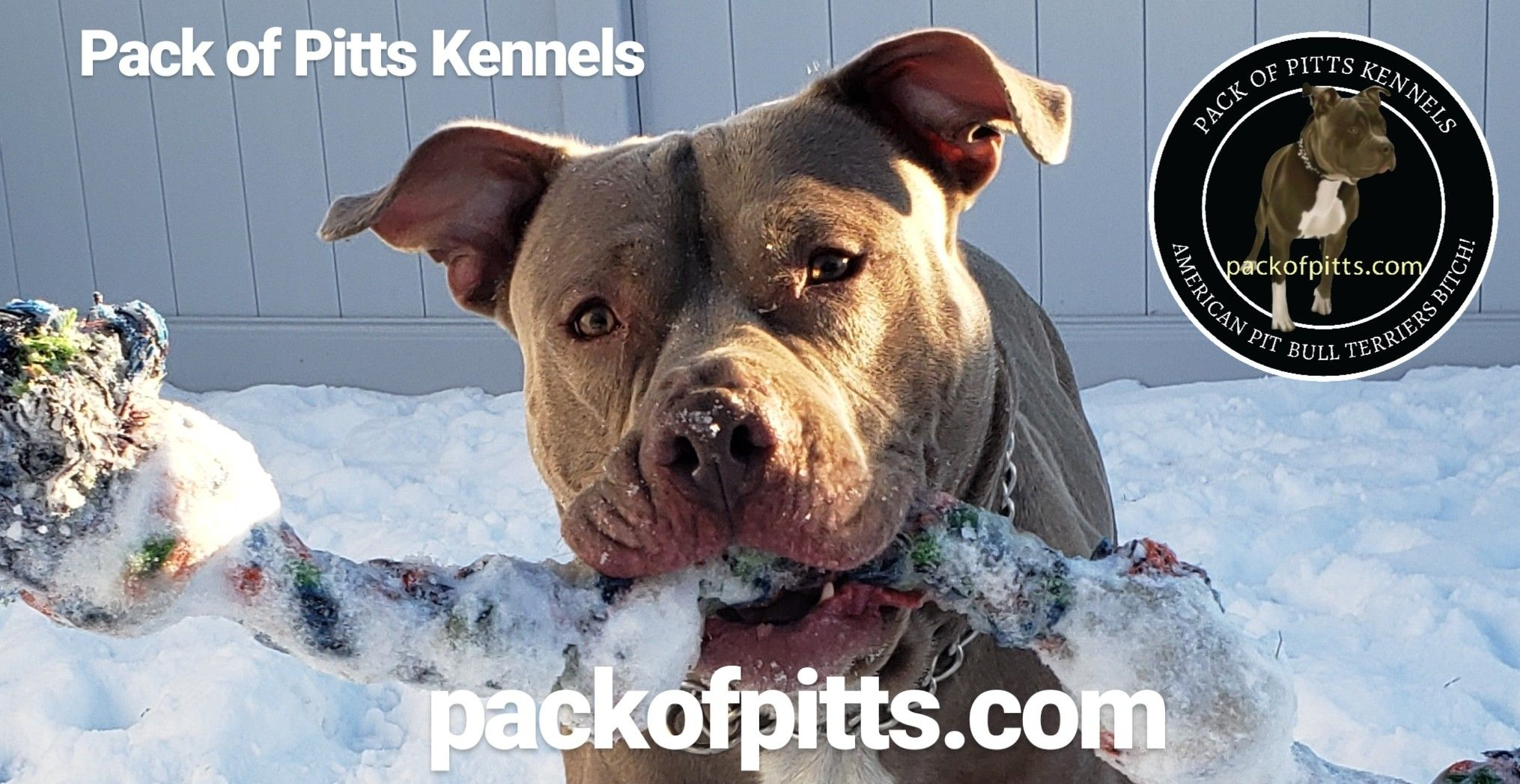Pack of pitts kennels buffalo new york and niagara falls