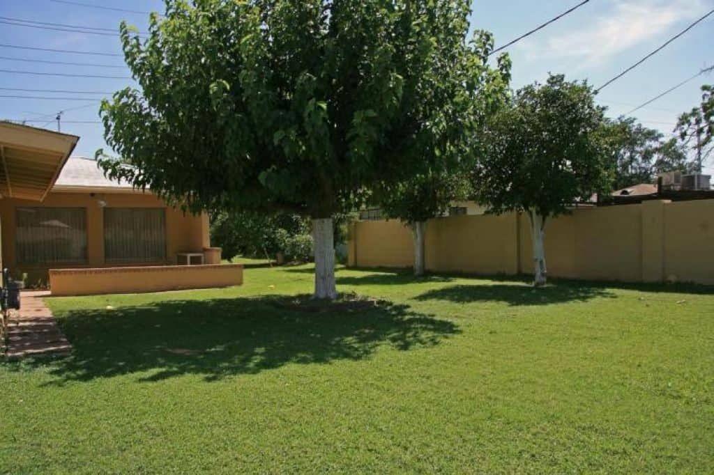 Ausgezeichnete Fruchtlose Maulbeerbaum Baume In Ihrem Garten Dieser Garten Baum Kann Leicht Propagiert Durch St Mulberry Tree Backyard Garden