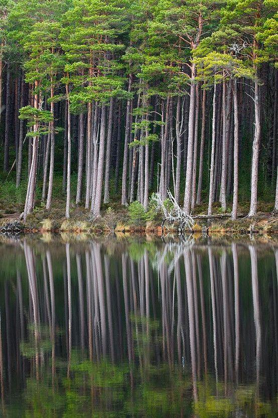Still Loch Ancient Forest – Scotland  #travel