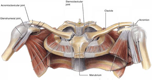 Shoulder Joints | Range of Motion | Pinterest | Shoulder joint