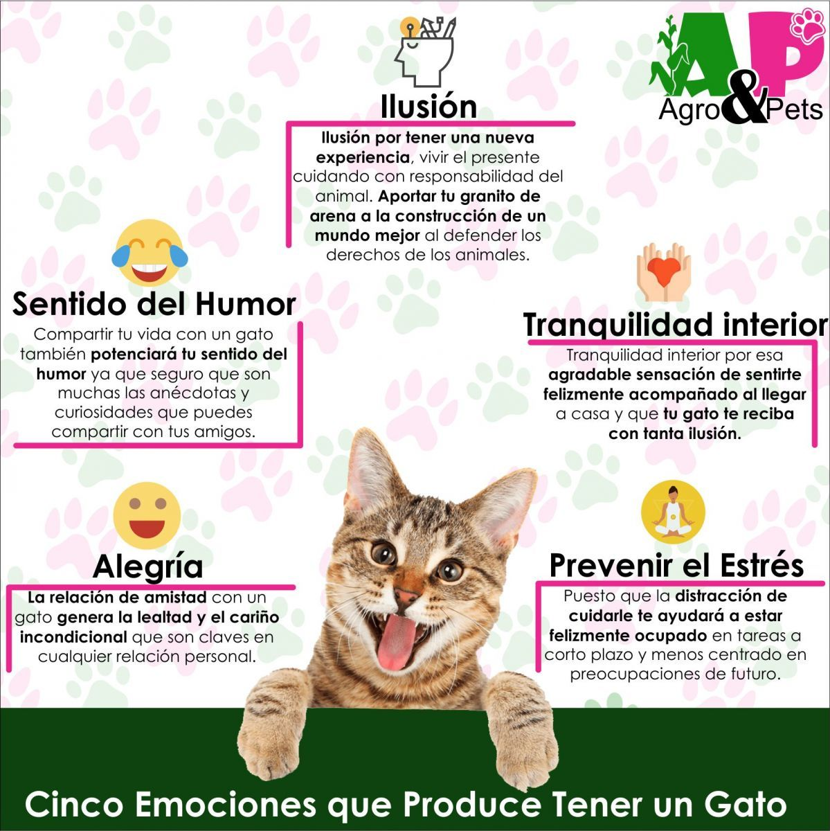 10 Ideas De Gatos Gatos Amantes De Los Gatos Mascotas