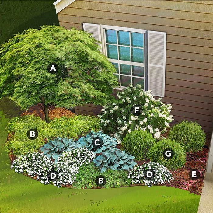 shade garden plan for south region featuring Japanese maple, mahonia, hosta, New Guinea impatiens, coleus, oakleaf hydrangea, boxwood