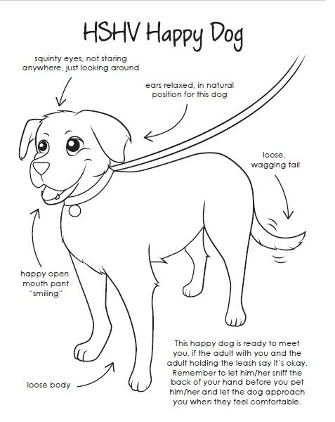A Coloring Page That Teaches Children About Safe Dog Body Language