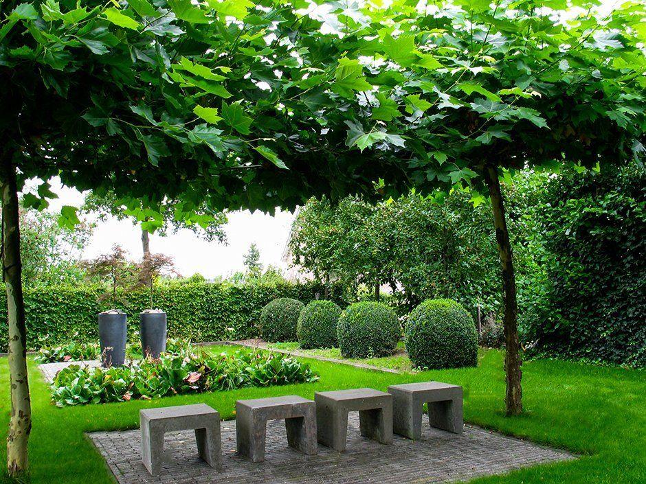 Buxus in moderne tuin google suche garden