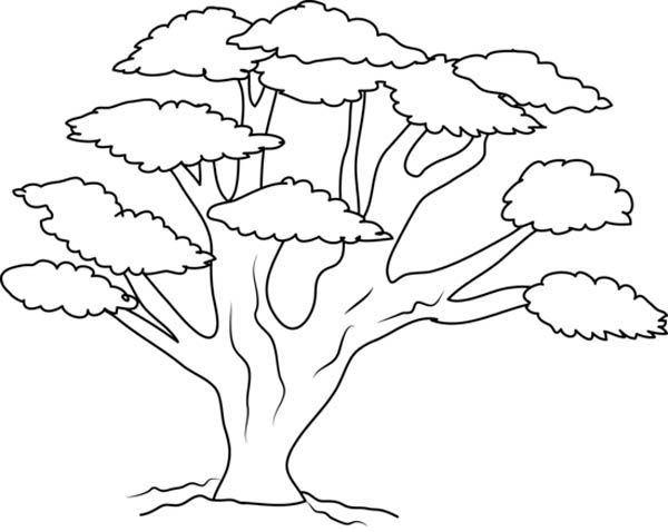 Tree coloring pages tree branch coloring pages kids coloring pages ...