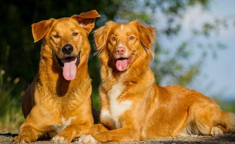 Pin By Vandhana Prakash On Labrador Retrievers Puppies Dog