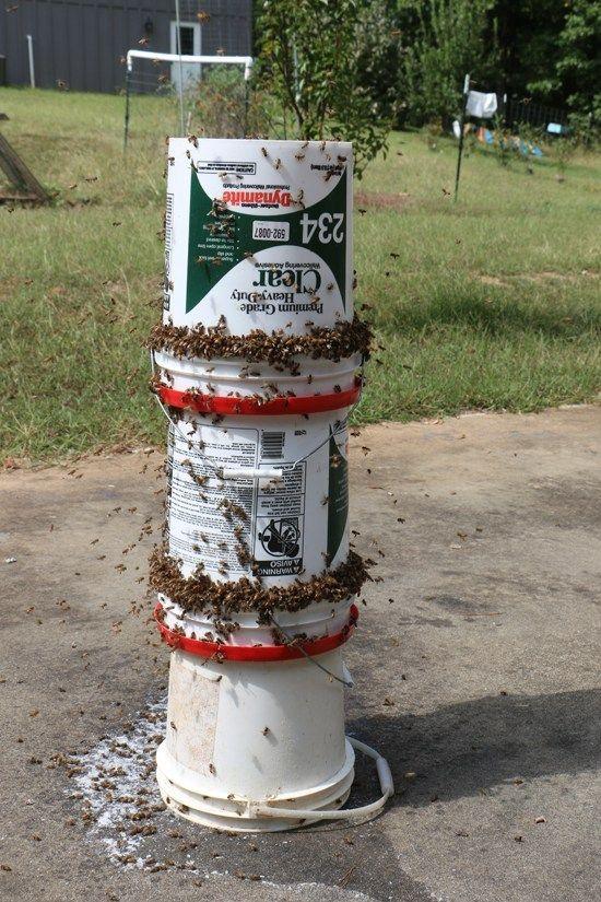DIY Bee Yard Feeder + VIDEO Keeping Backyard Bees | Bee ...