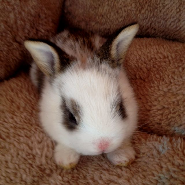 Our new bunny ;)