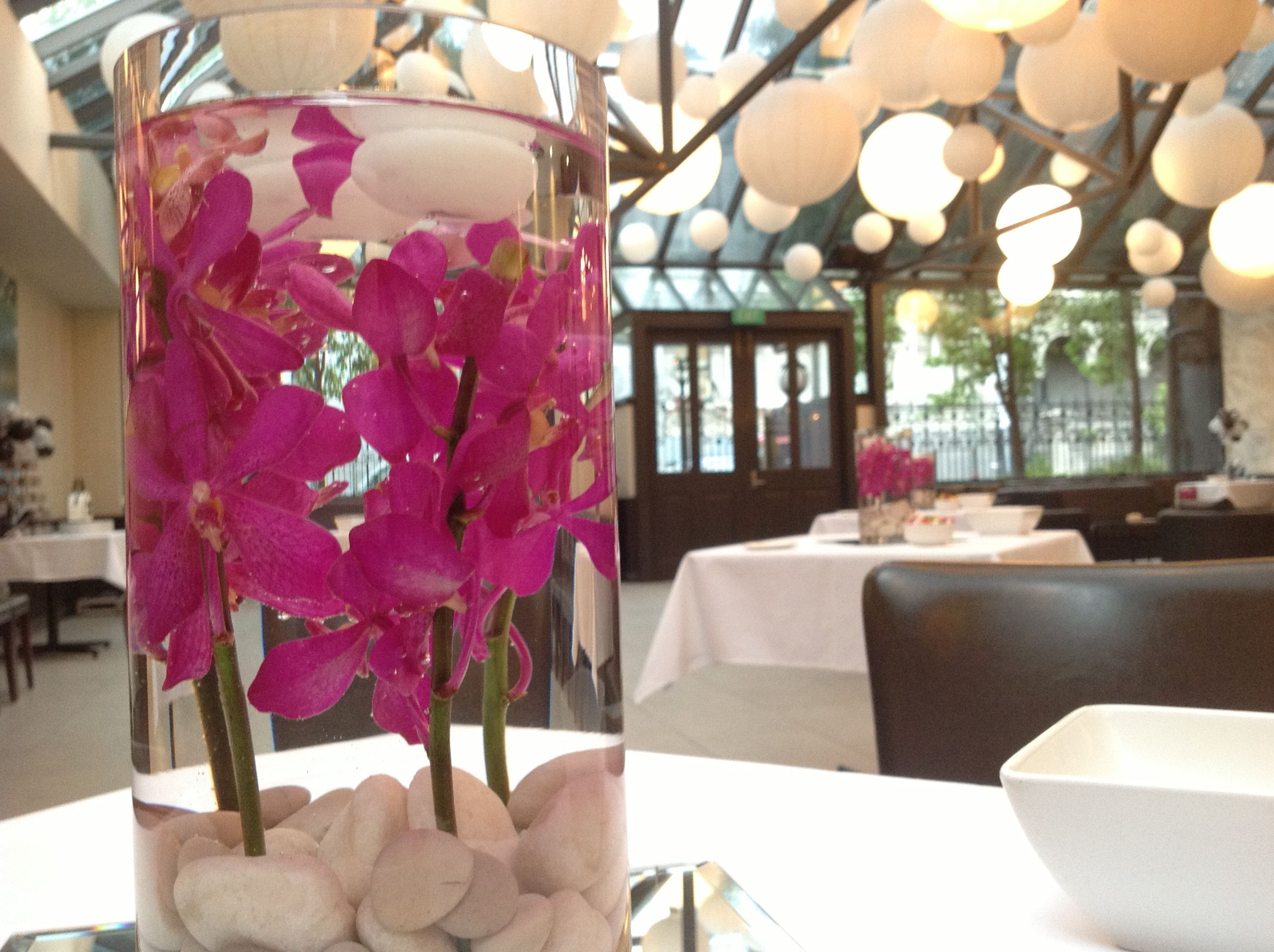 Hot pink orchids are one of our faves!!
