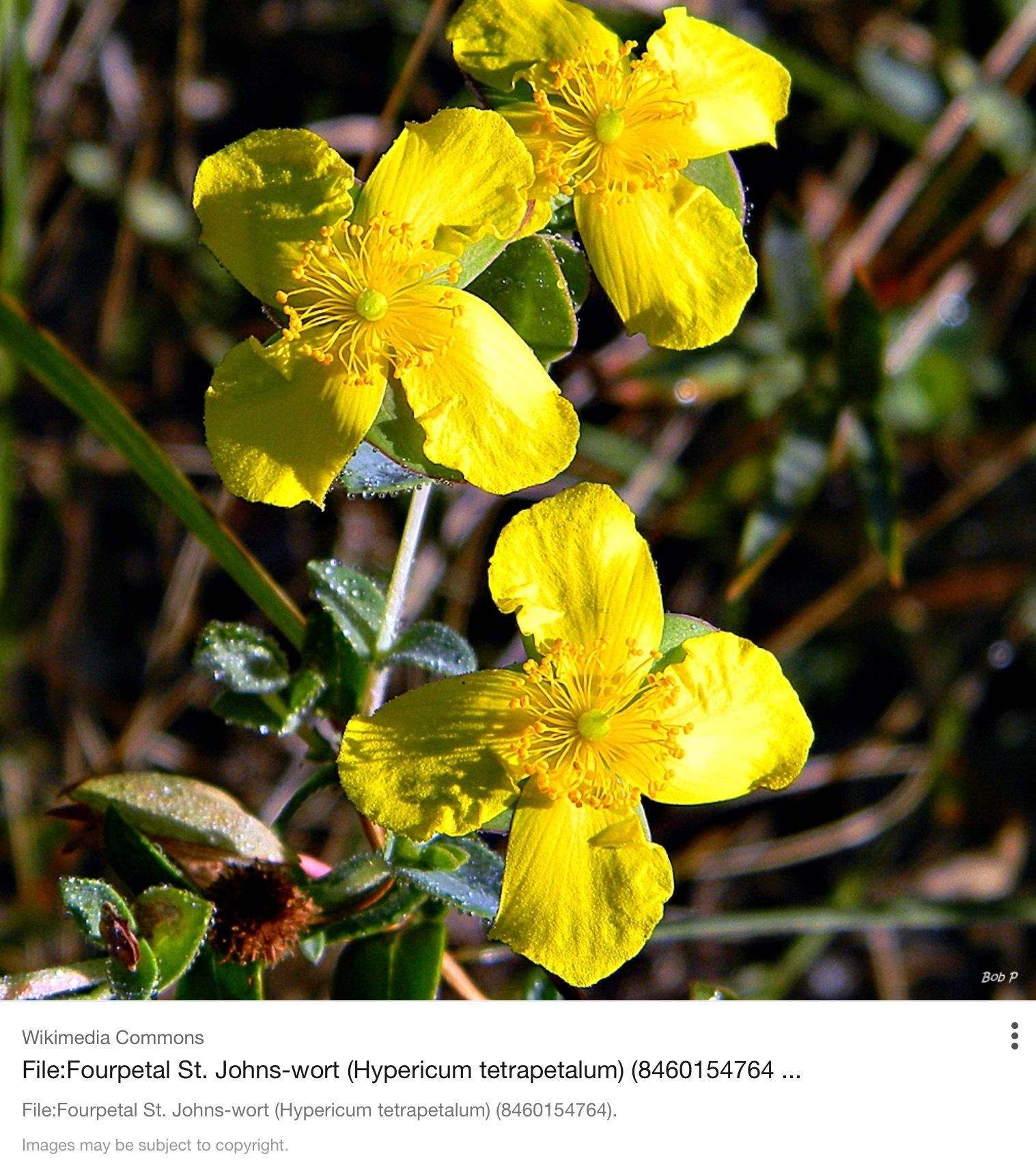 Flowers that like sun and moist soil - Bees