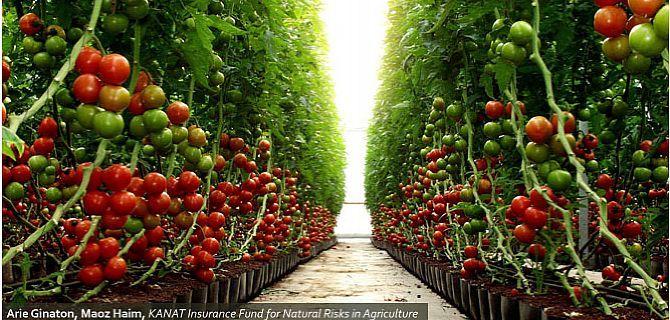 """Résultat de recherche d'images pour """"israel, technologies agricoles"""""""