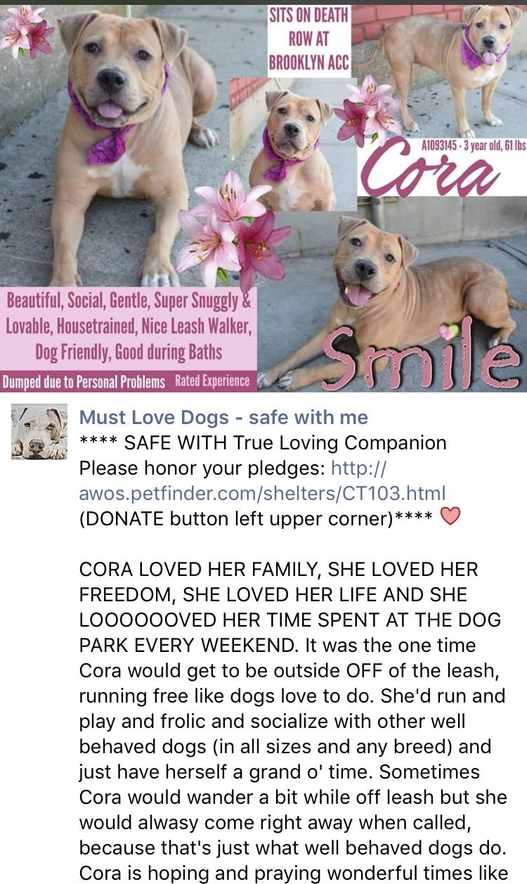 10 25 16 Cora Is Obviously Out Of Nyc Acc Long Time Ago Ij