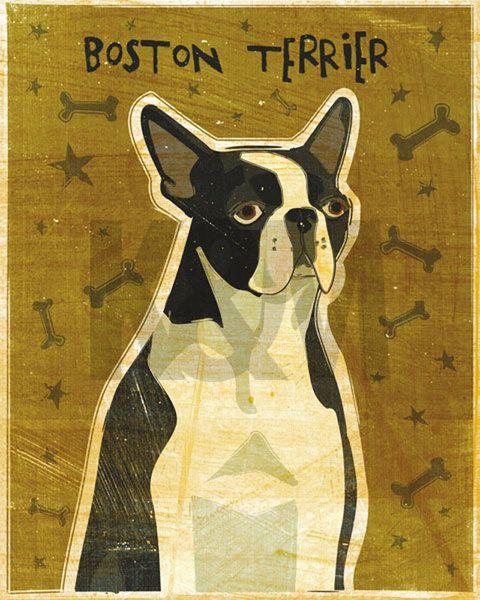 Boston Terrier Posters & Art Prints by John Golden - Magnolia Box ...