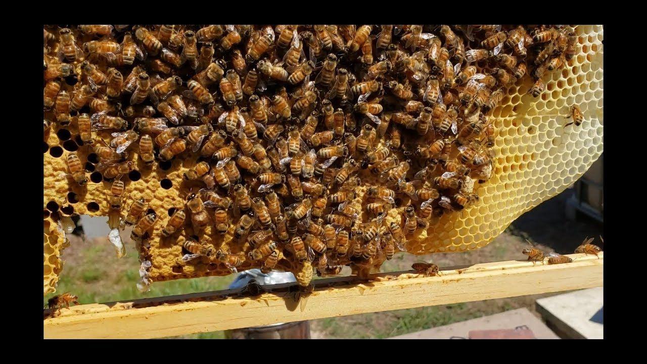 37813da00bffce8f2b5c6baa02723979 - How To Get Rid Of Bee Hive In Attic