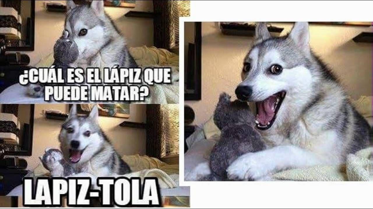 Related Image Chistes Del Perro Husky Memes Perros Memes Divertidos Sobre Perros