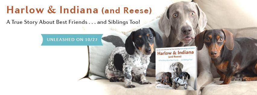 Bring home these adorable pups in book form on OCTOBER 27