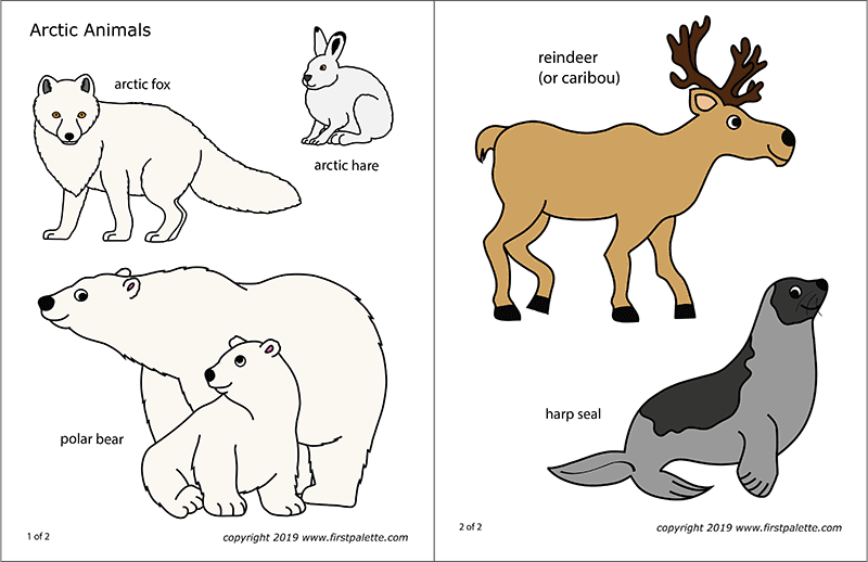 Arctic Polar Animals Free Printable Templates Coloring Pages Firstpalette Com In 2020 Arctic Animals Polar Animals Artic Animals