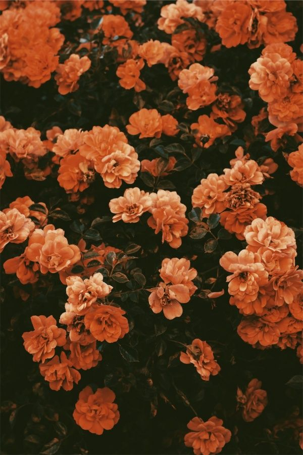 Walkinthesun Vsco Vscox Flower Iphone Wallpaper Orange Aesthetic Aesthetic Wallpapers