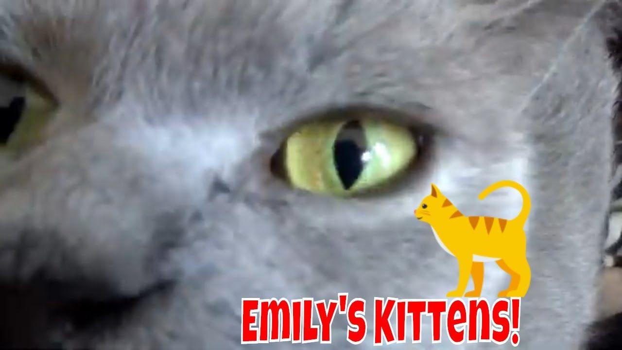 Emily S Kittens Turned 3 Weeks Old Cute Little Things Kittens Cute Little Things Kitten Food