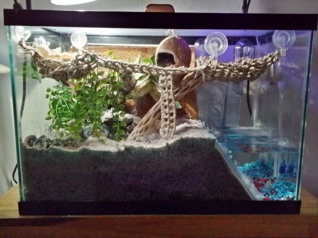 How to Decorate Your Hermit Crabs Tank