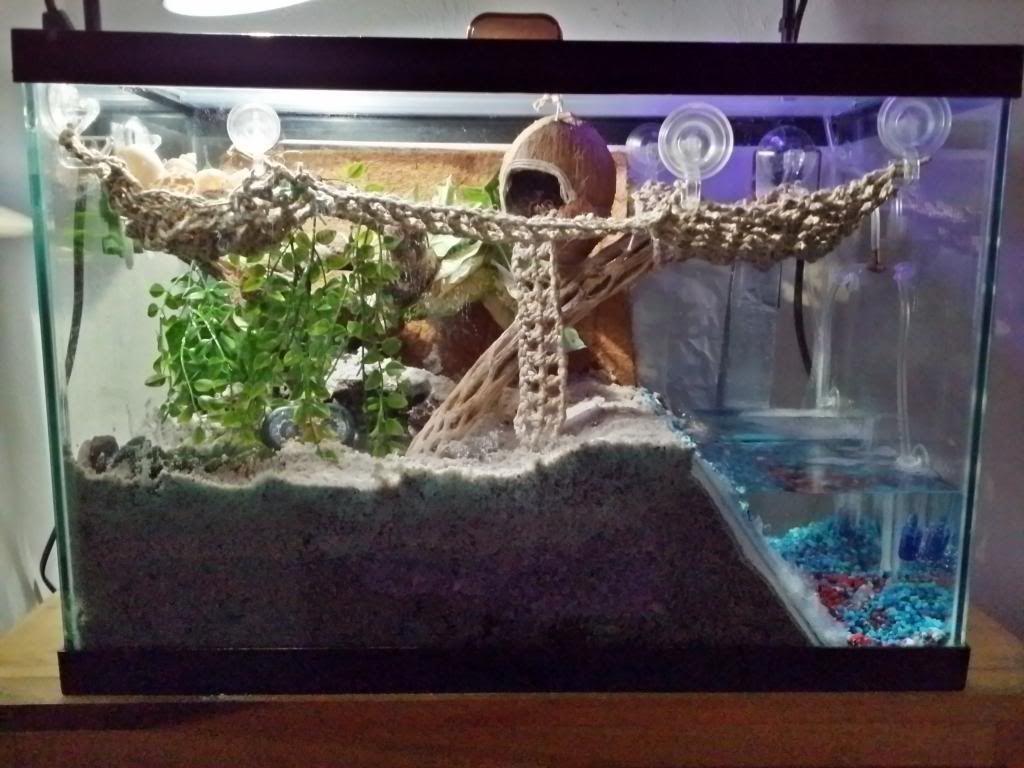 Crab Aquarium Setup