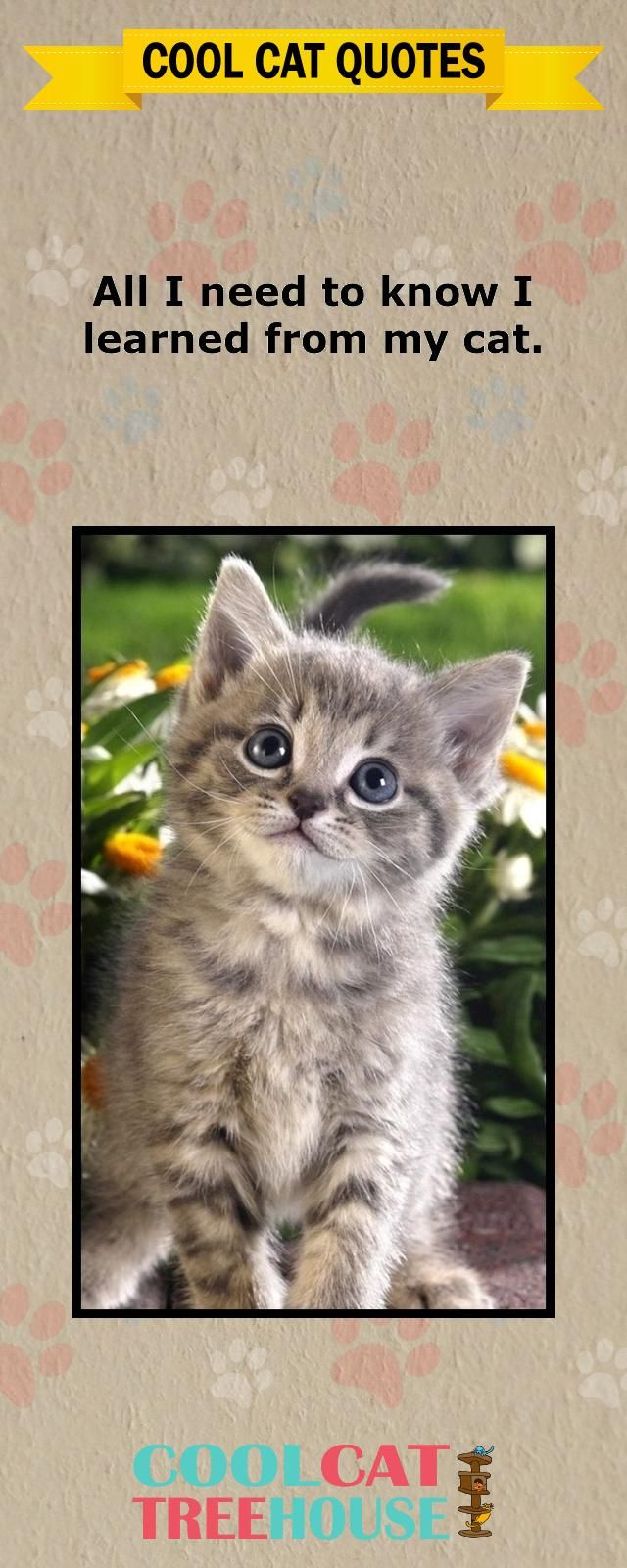 Cats are the inspiration on living a joyful life enjoy these words