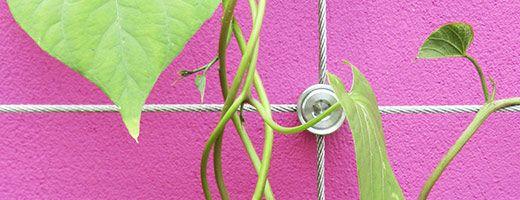 Stainless Steel Wire Trellis Kits Backyard Happy Wire