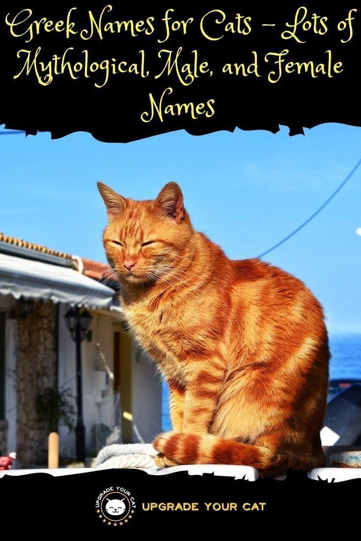 Greek Cat Names Mythological, Male, Female, and Awesome