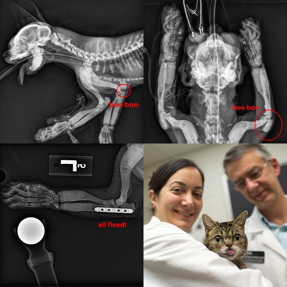 BUB's BONES, before and after surgery. A big thanks to the