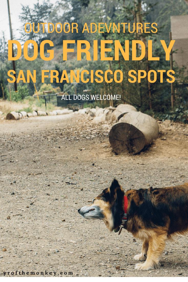Dog Friendly San Francisco Spots A resident dog mom's