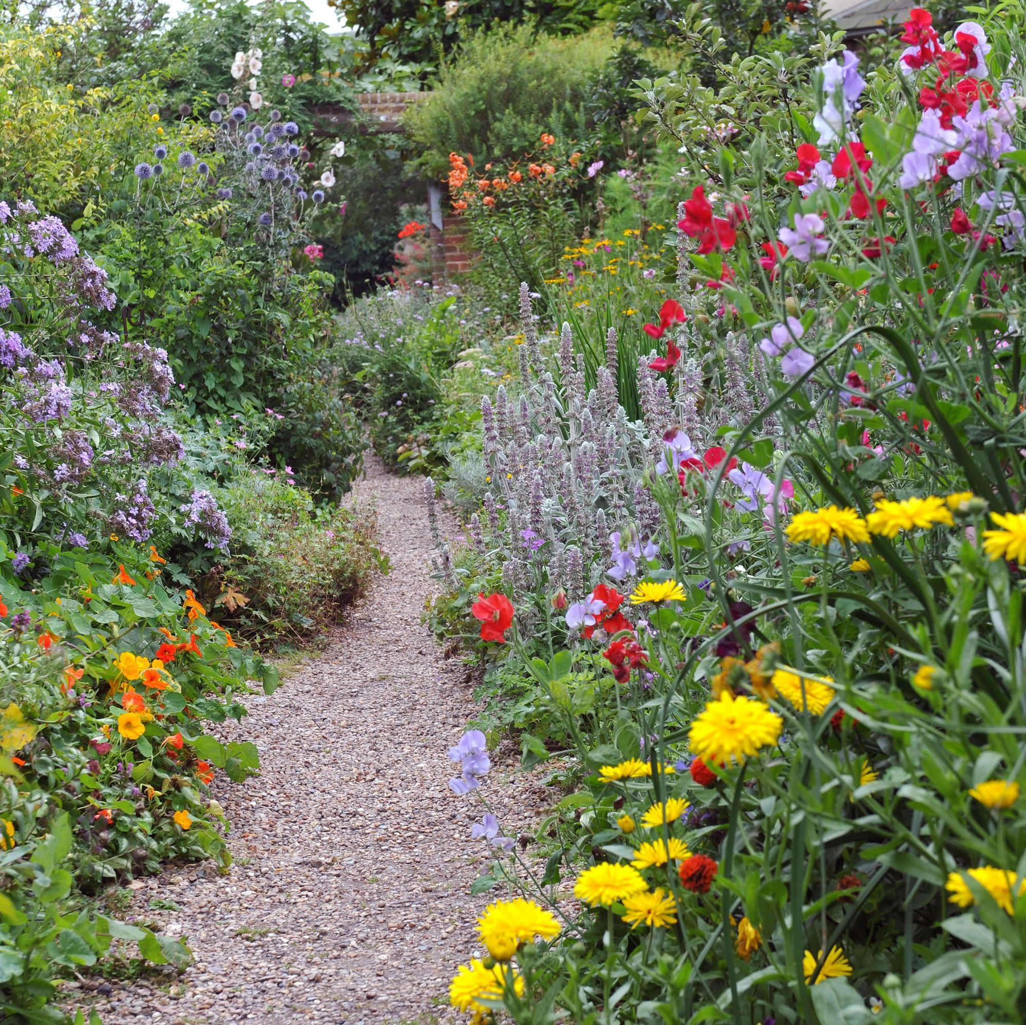 Fill Your Sun Drenched Garden With These Perennials That Love Lots Of Light Full Sun Perennials Perennials Sun Perennials