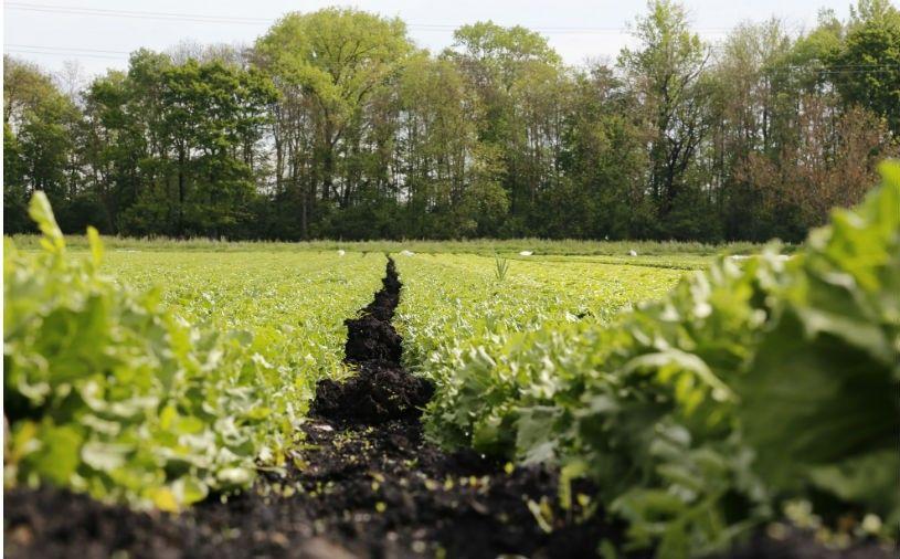 Removing Wildlife Habitat Doesn T Make Food Safer Study Finds Safe Food Wildlife Habitat Habitats