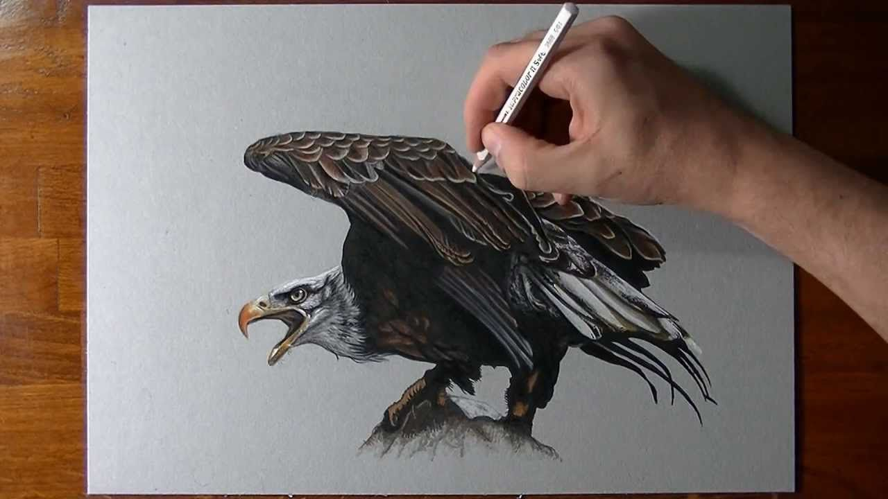 Uncategorized Videos Of Drawing how i draw an eagle videos pinterest drawing and drawings drawings