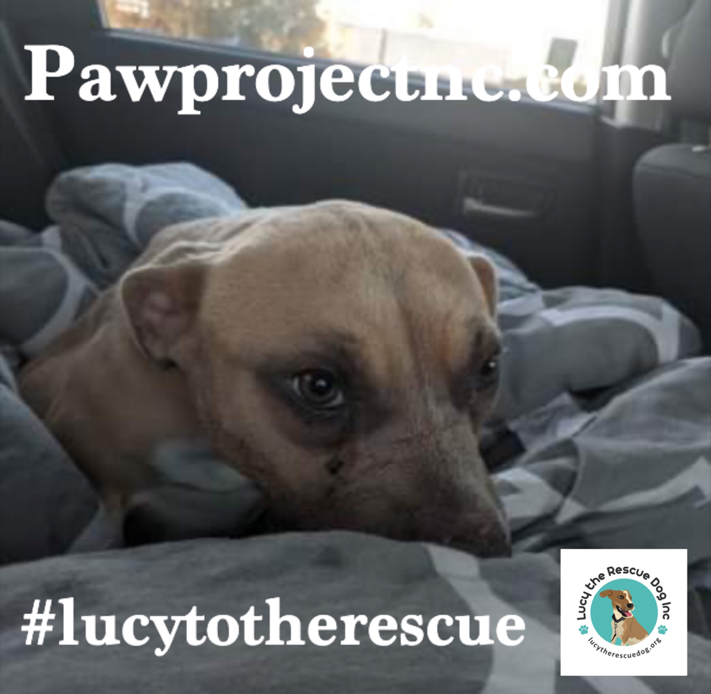 Lucy To The Rescue Lucy The Rescue Dog Inc In 2020 Rescue Dogs Rescue Dogs