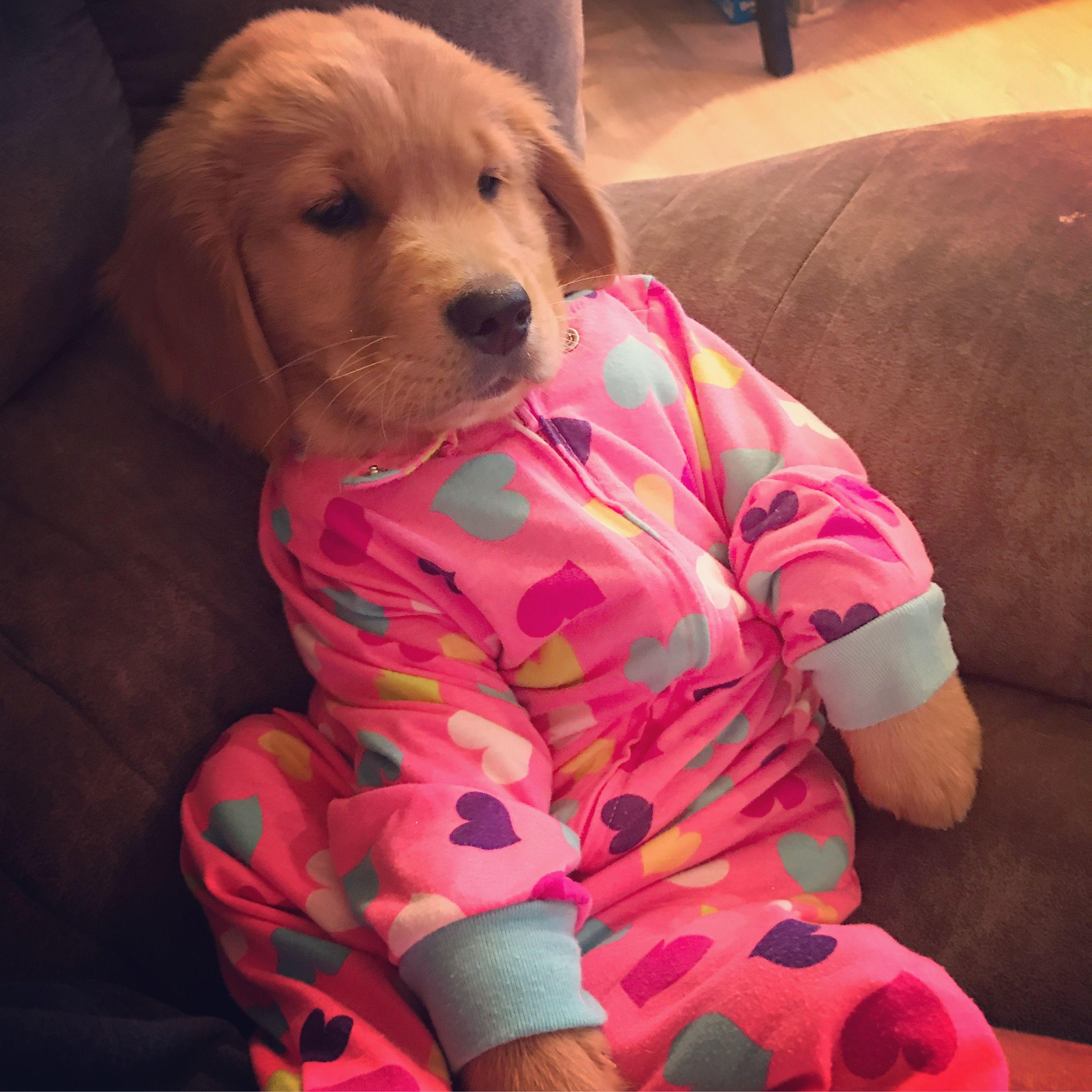 Golden Retriever Puppy Onesie Niedliche Tierbabys Retriever Welpen Babyhunde