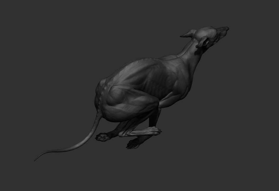 Pin by paw2 on dog anatomy | Pinterest | Animal anatomy, Dog anatomy ...