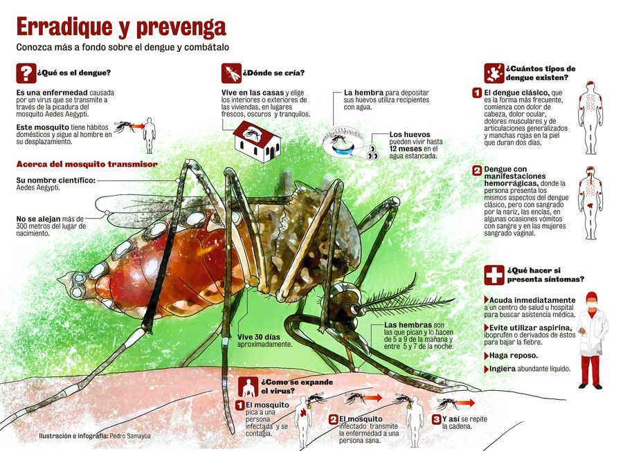Infografia sobre el dengue por Tetsuya Kenshi