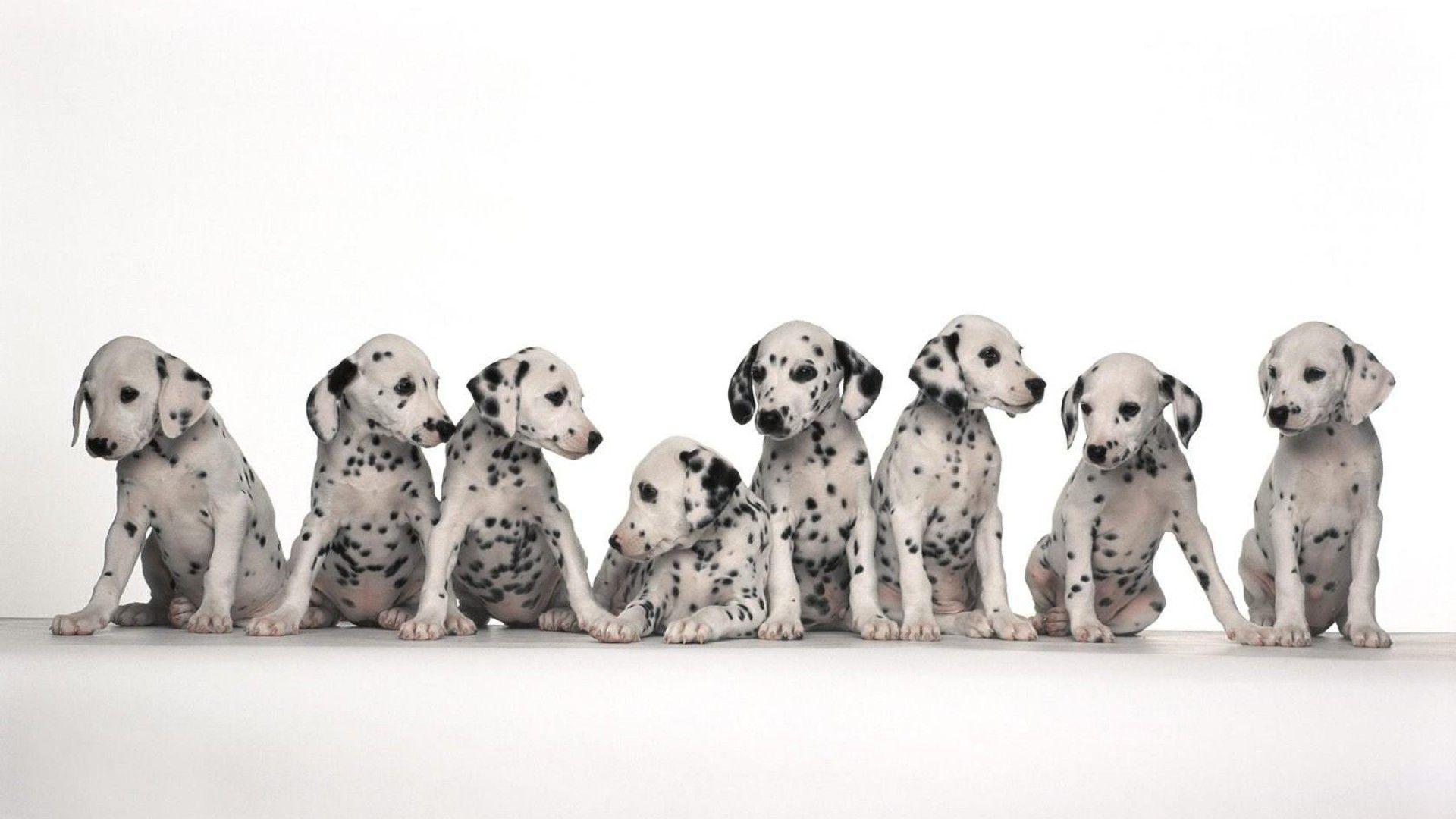 Hd wallpaper dog - Image For Dog Breeds Cute Dekstop Hd Wallpaper