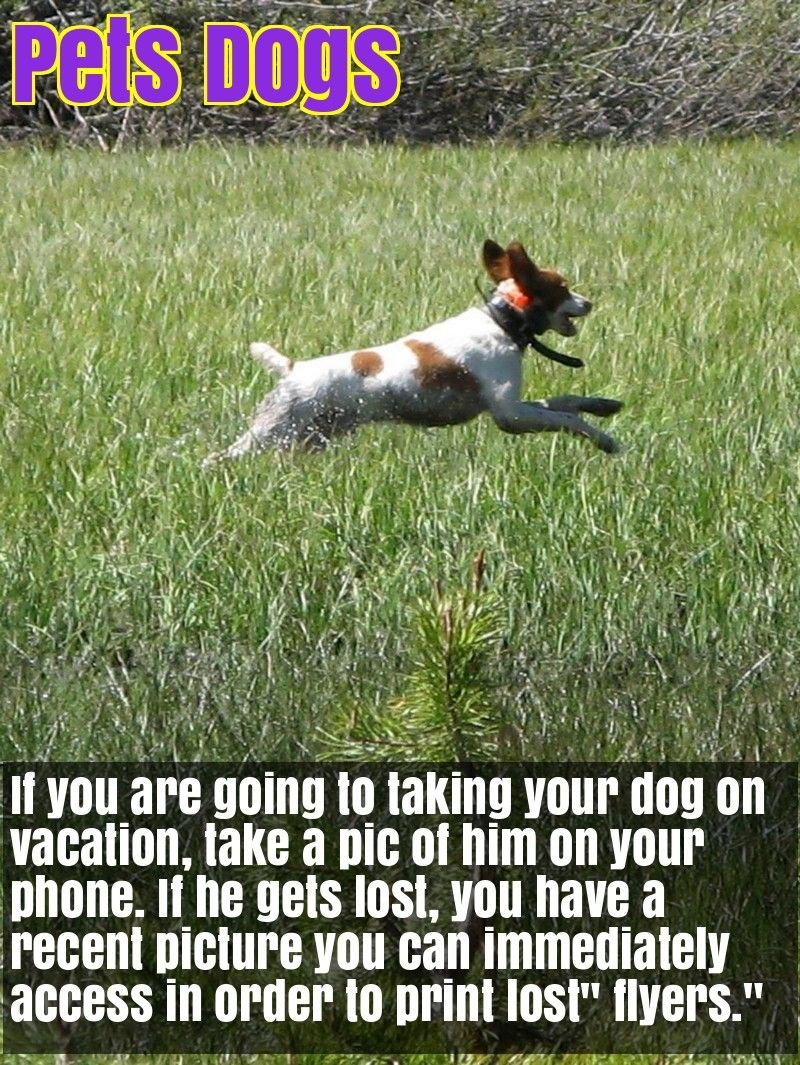 Are You Looking For Good Tips About Dogs Check This Out Dogs Pet Care Dogs Dog Training Obedience