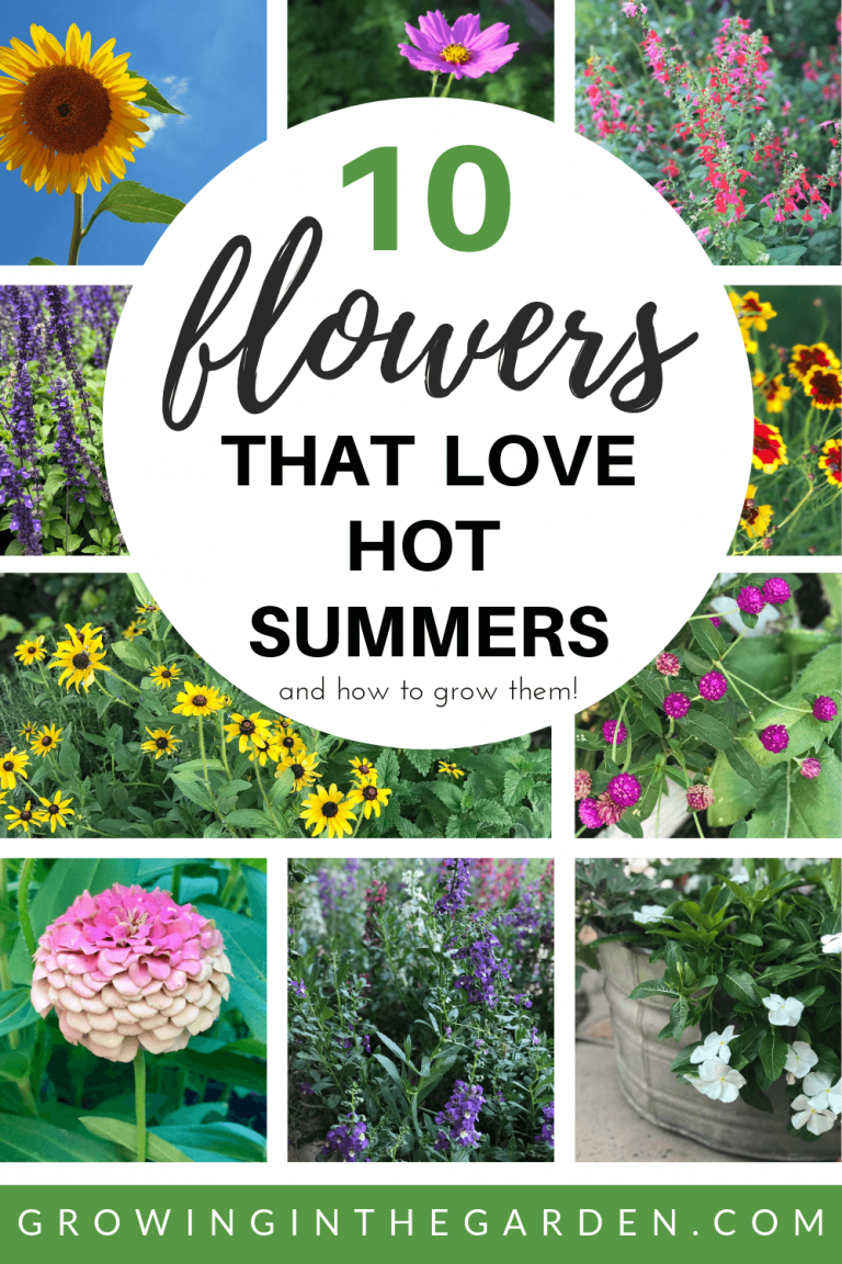 10 Flowers That Love Hot Summers And How To Grow Them Growing In The Garden Summer Plants Growing Flowers Outdoor Plants