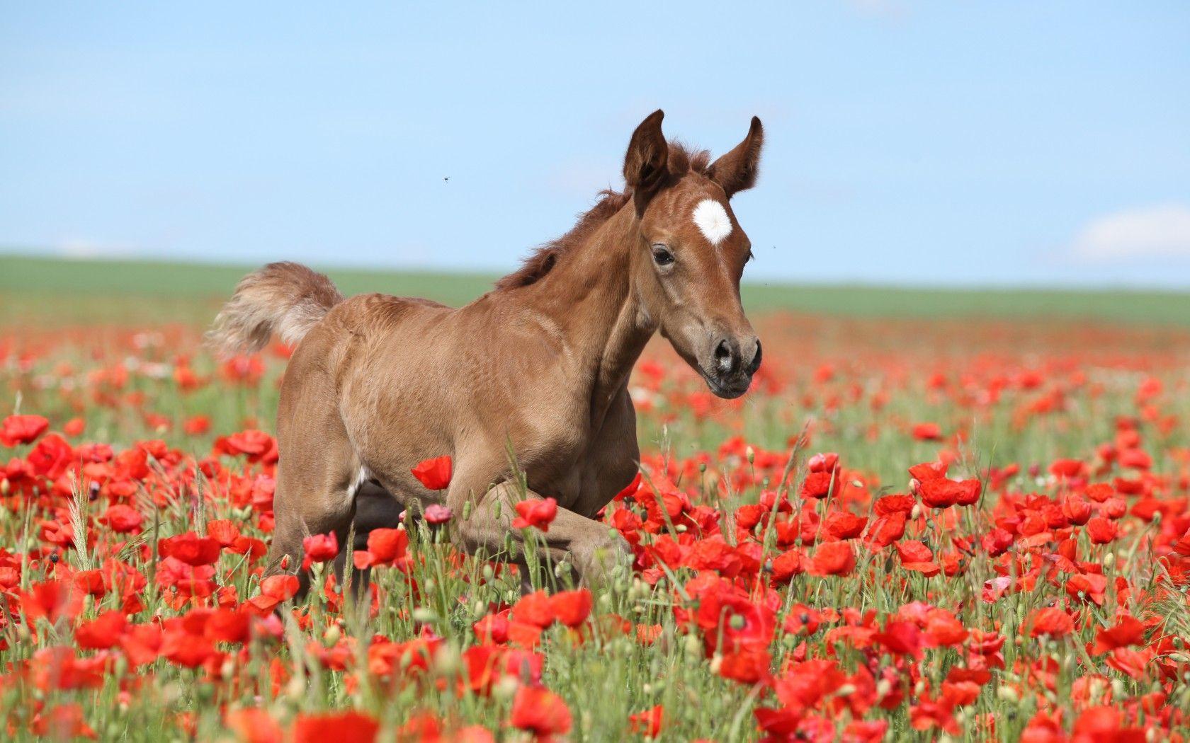 Обои лошадь, жеребёнок. Животные foto 6