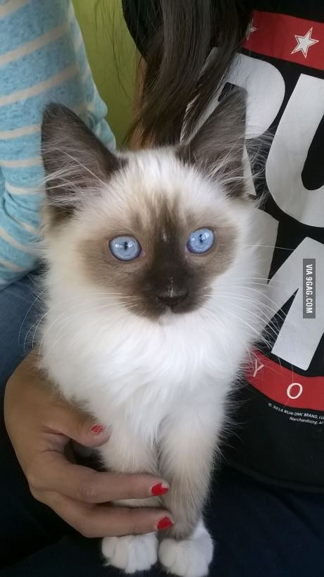 I heard you like eyes? how do you like my kittens eyes?
